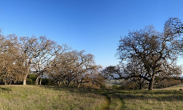 Rancho San Antonio Open Space